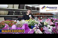 MERCHMA - QUARTA -04-05-2016.mp4