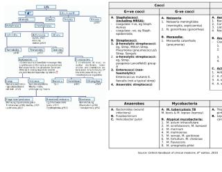 Classification of bacteria.docx